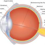 Fehlsichtigkeit: Aufbau des menschlichen Auge