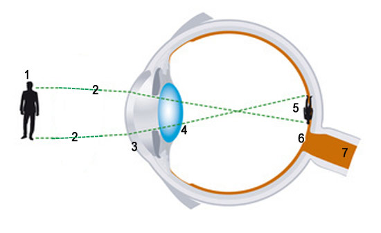 so funktioniert das Auge