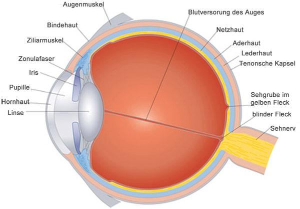 Die Trockenheit des Auges nach der Laserkorrektion